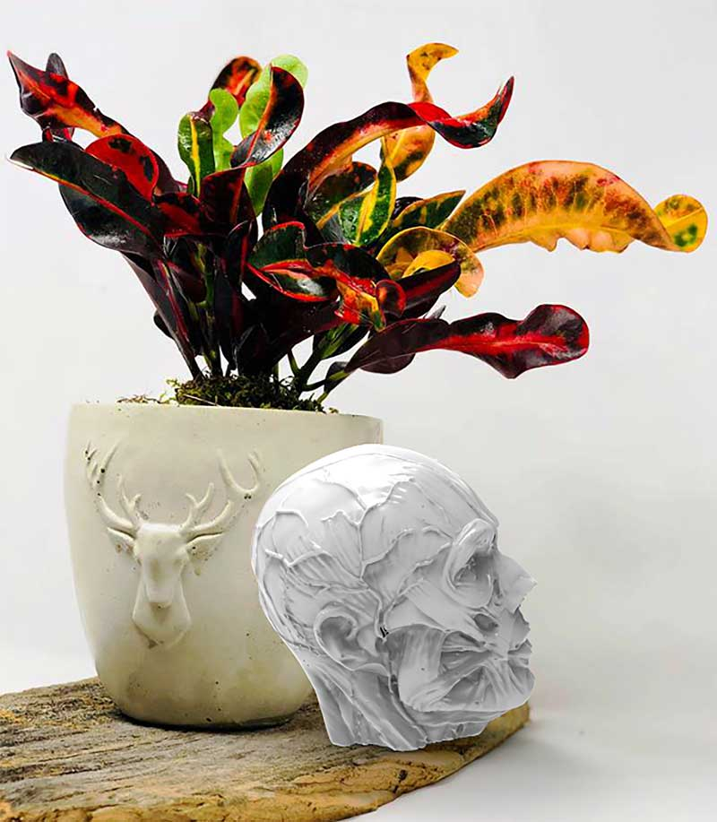 deer head pot designed by Greenery 33 next to human skull pot that was reverse engineered by Exact Metrology